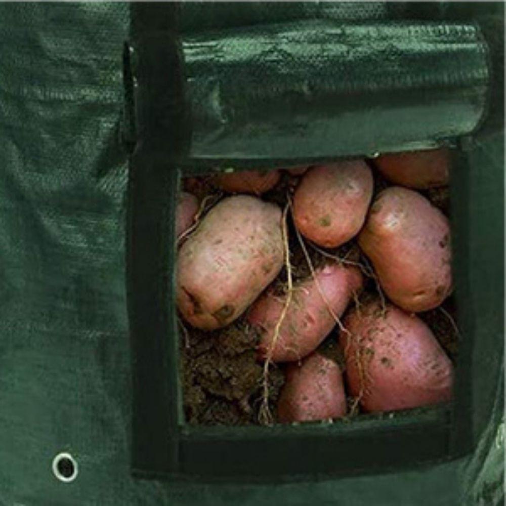 where to buy potato grow bag online